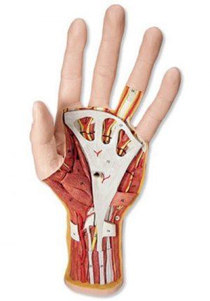 chirurgia-della-mano-milano